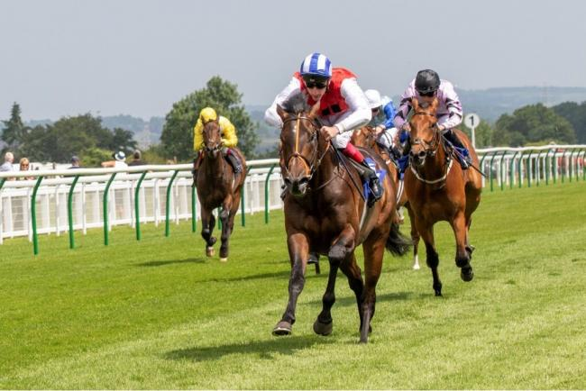 """Positive"" ridden by Adam Kirby and trained by Clive Cox winning The Whitsbury Manor Stud British EBF Blagrave Maiden Stakes."