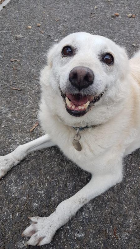 Missing Salisbury dog returns home | Salisbury Journal