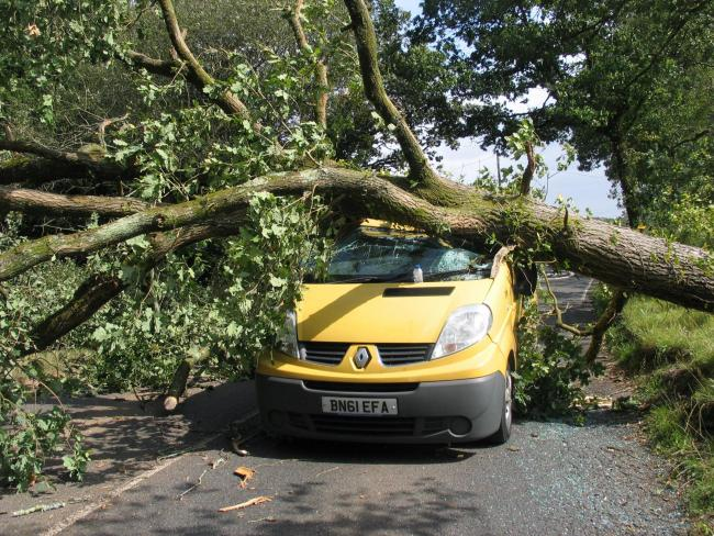 The oak tree fell on a van on the Verwood Road near the entrance to the Somerley estate. Image: Simon Rowley