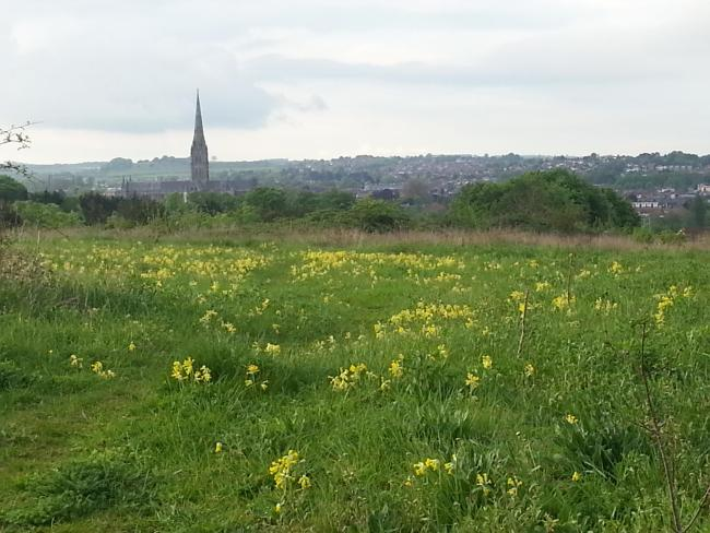Landscape view of the cathedral from Lime Kiln Way in May.
