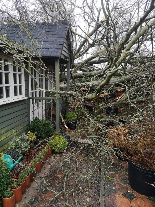 Salisbury Journal: A reader sent in this picture of a tree falling down near their home in Roman Road last weekend