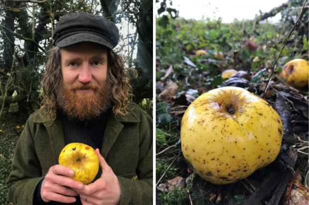 Archie Thomas with his newly discovered type of apple. Pictures by Hannah Thomas.