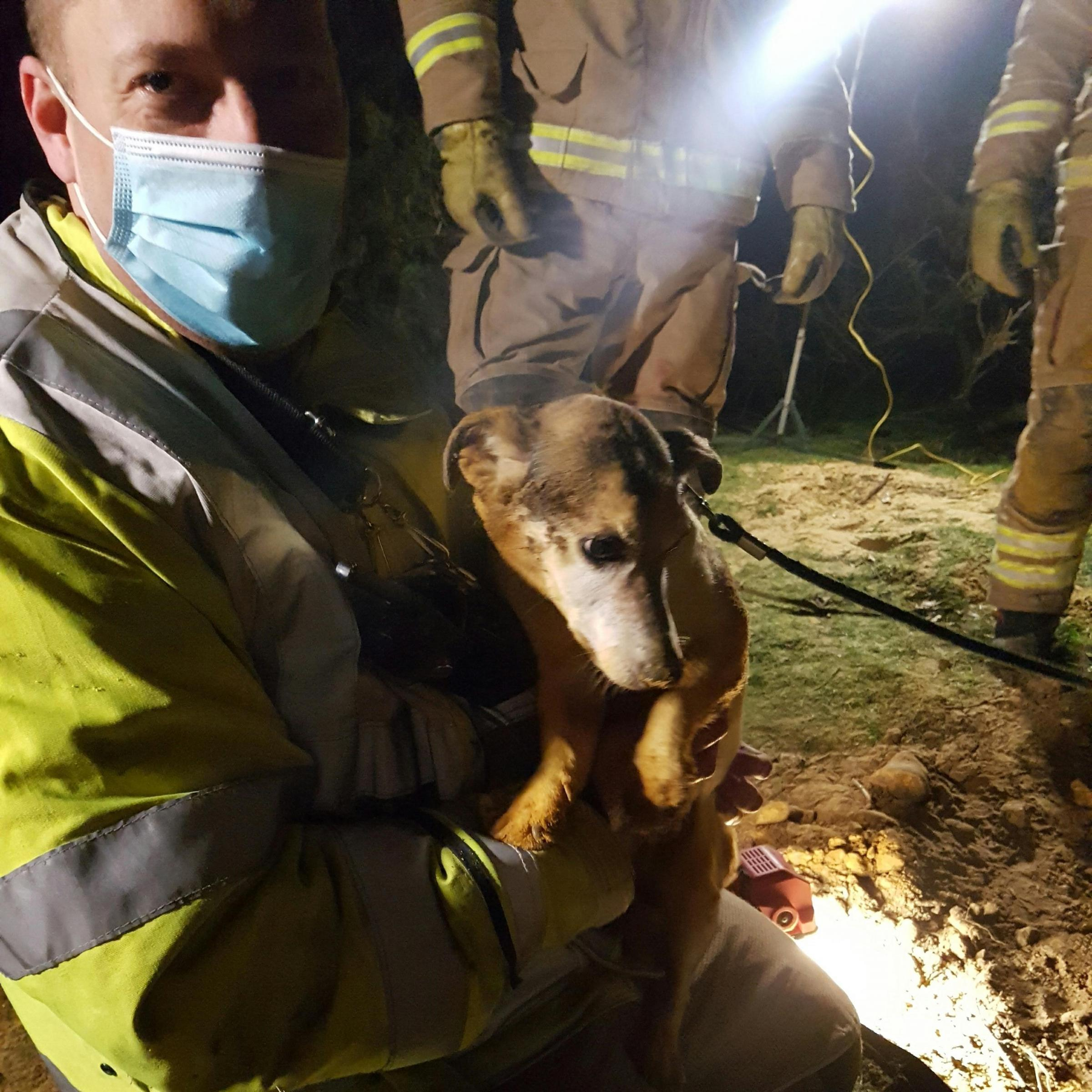 Toby the Jack Russell who was rescued after getting stuck down a rabbit hole in Rockford Picture: Hampshire Fire and Rescue Service