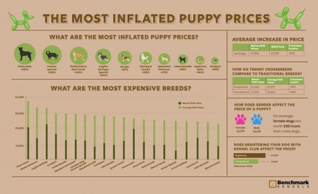 Salisbury Journal: The most inflated puppy prices. (Benchmark Kennels)
