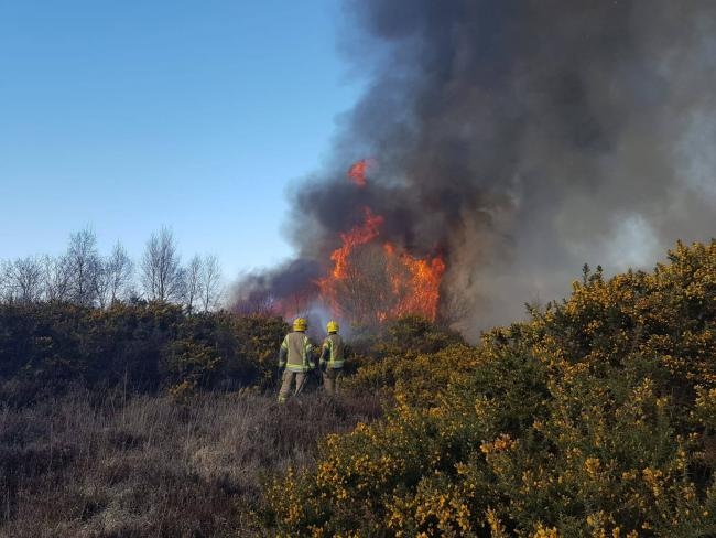 Firefighters battled a healthland blaze near Wimborne   Picture: Dorset and Wiltshire Fire and Rescue Service