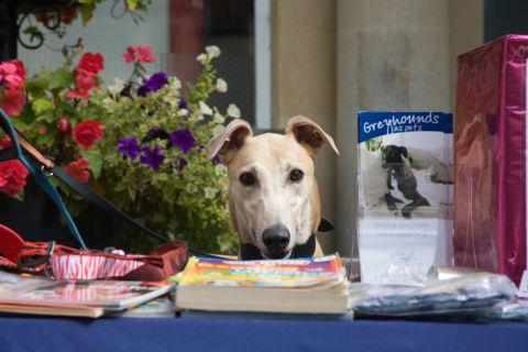 Fundraising fete for Greyhound Rescue
