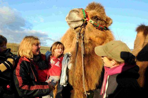 Camels are a hit at playschool fair