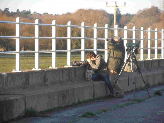 Twitchers keep a lookout for the glossy ibis at the Bickerley.