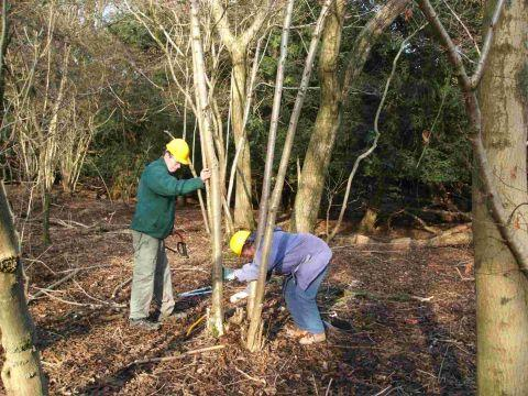 Free training courses in woodland management