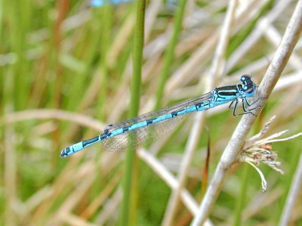 Moors Valley is famed for its dragonflies