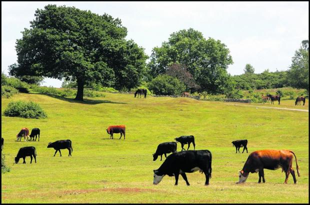 Salisbury Journal: TB testing scheme may be scrapped in the New Forest