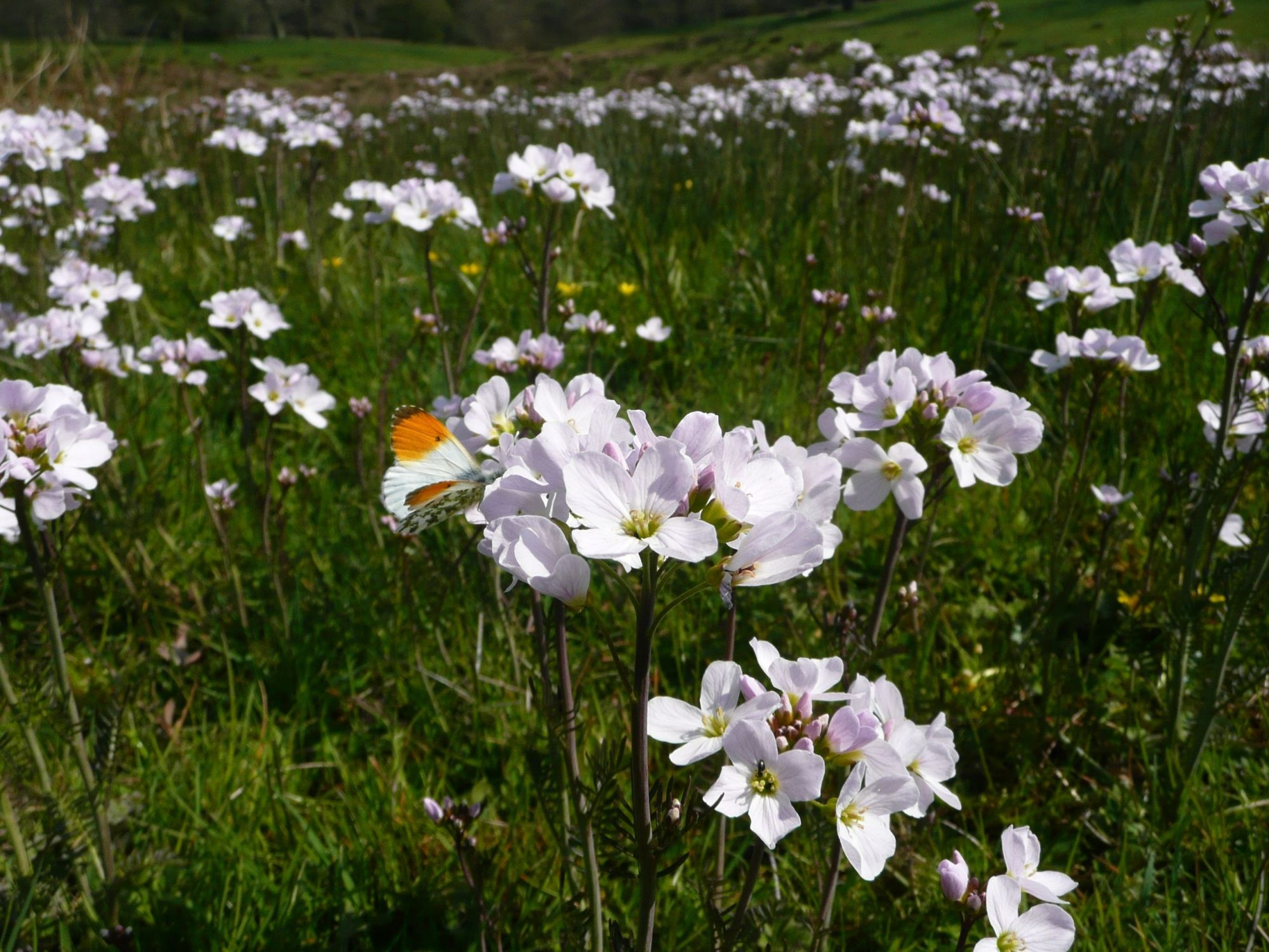 £3m funding boost for Plantlife meadow project