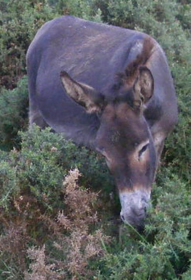 Salisbury Journal: Woman who found dead donkey 'cannot erase image' from her mind