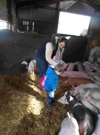 Down on the farm with Pitton Pre-School