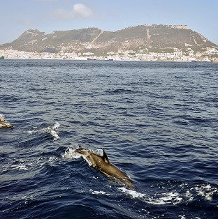 A pod of dolphins is reported to have protected a British swimmer undertaking the Oc