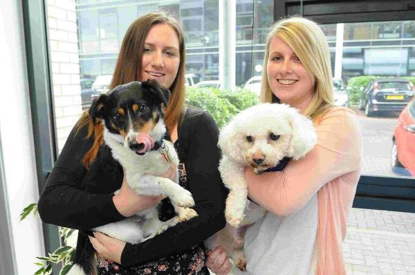 Salisbury Journal: Bring Your Dog to Work Day at Animal Friends Insurance, Amesbury