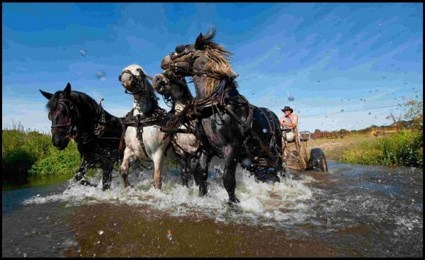 Massive Percheron horses get a much needed cooling splash in a stream at the end of a hard working day on a Harbridge farm Picture: Phil Yeomans/BNPS