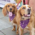 Salisbury Journal: Two dogs getting into the spirit of the Pershore Plum Festival.