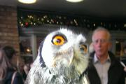 Chance to pet rescue owls at Cross Keys