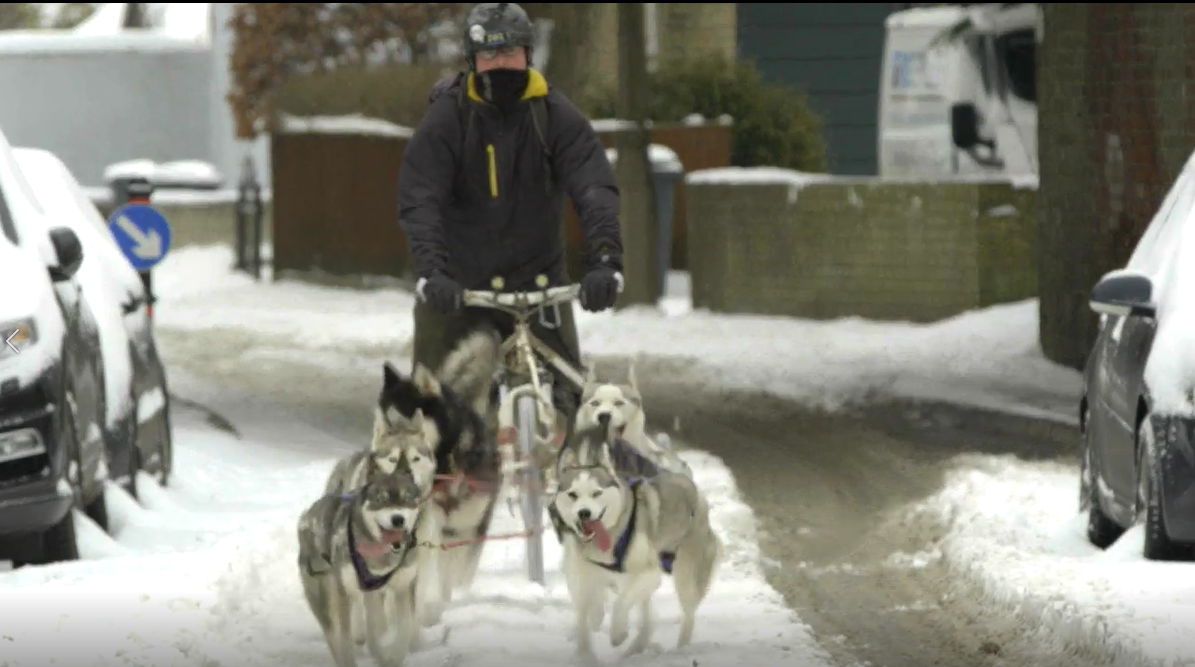 WATCH: Wilton man uses huskies to beat the bad weather