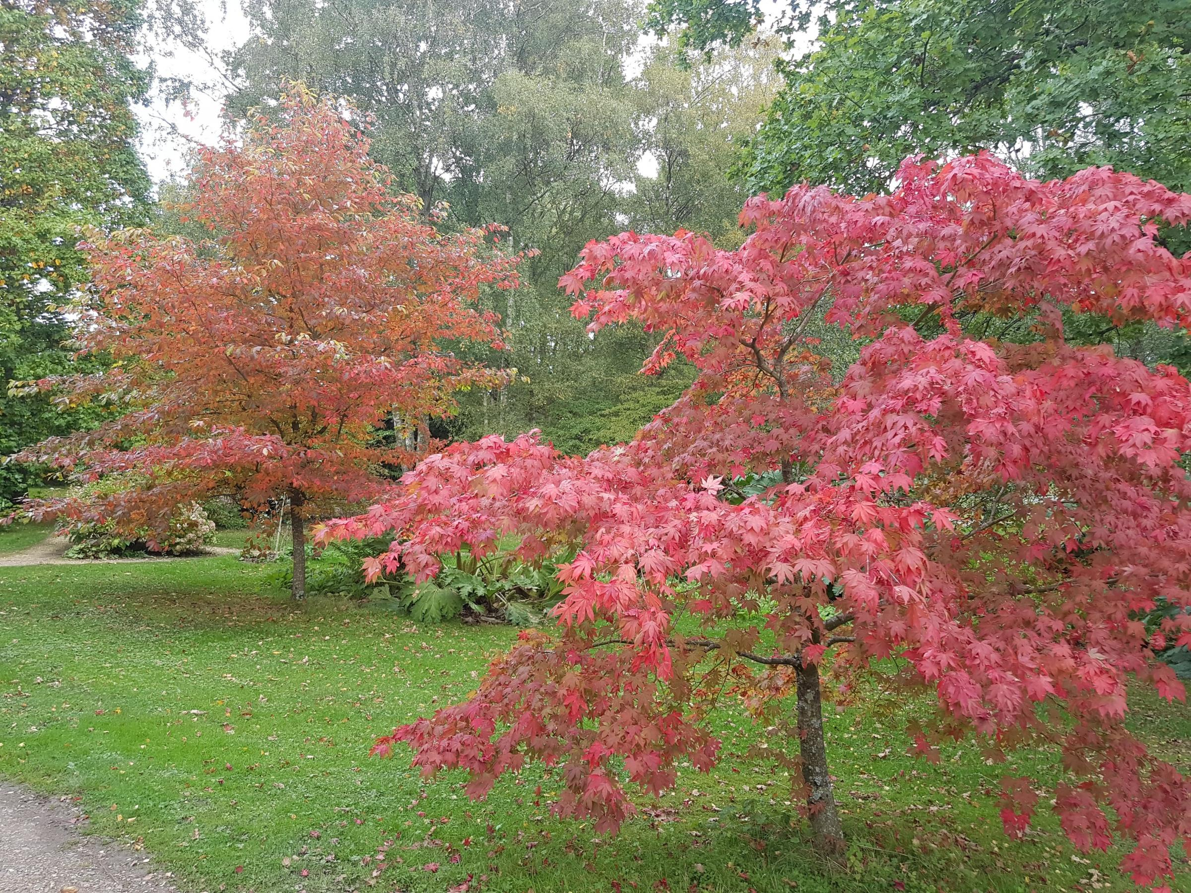 Autumn Colour Walk With Furzey Gardens Head Gardener Pete White