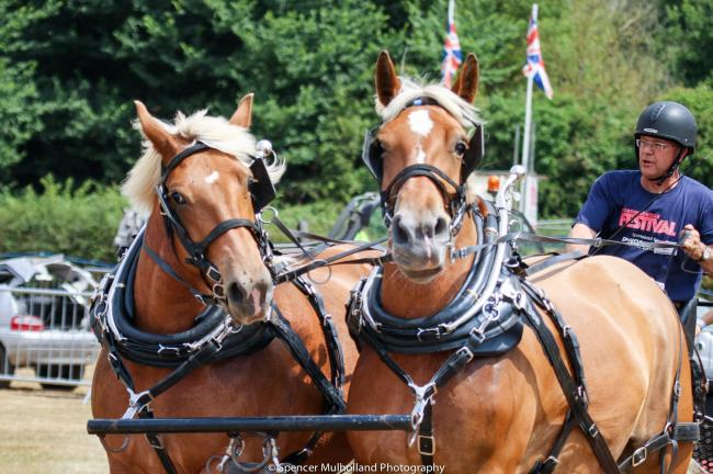 Heavy horses who will be helping re-create Constable painting in the River Avon as part of the Culture Week in Fordingbridge